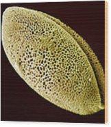 Daffodil Pollen, Sem Wood Print