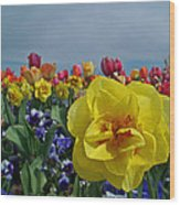 Daffodil Up Front Wood Print