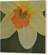 Daffodilicious Wood Print