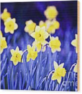 Daffodils Flowers Wood Print
