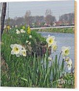 Daffodils In Holland 01 Wood Print