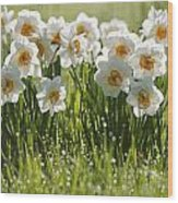 Daffodils In The Dew Covered Grass Wood Print