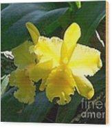 Daffodils In The Wild Wood Print