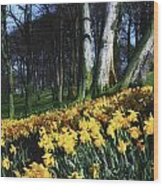 Daffodils Narcissus Flowers In A Forest Wood Print