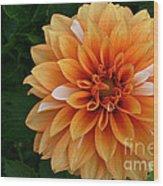 Dahlia 7001 Wood Print