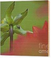 Dahlia Bud Back Side Wood Print