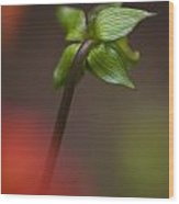 Dahlia Bud Wood Print