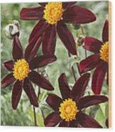Dahlia Dahlia Sp Honka Black Variety Wood Print