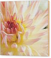 Dahlia Flower 01 Wood Print