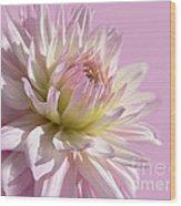 Dahlia Flower Pretty In Pink Wood Print