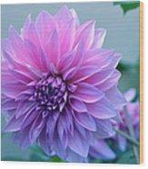 Dahlia Flower2 Wood Print