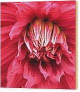 Dahlia In Red Wood Print