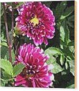 Dahlia Named Edinburgh Wood Print