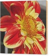 Dahlia Named Pooh Wood Print