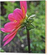 Dahlia Profile Wood Print