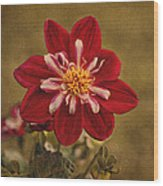 Dahlia Wood Print by Sandy Keeton