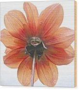 Dahlia Understudy Wood Print