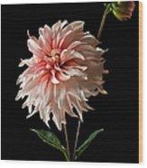 Dahlia With Bud Wood Print