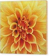 Dahliaburst Wood Print