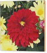 Dahlias And Daisys Wood Print
