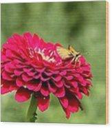 Dahlia's Moth Wood Print