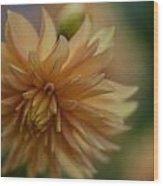 Dahlias Pastel Wood Print