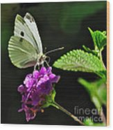 Dainty Butterfly 2 Wood Print
