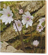 Dainty Flowers Wood Print