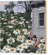 Daises Delight II Wood Print by Doug Kreuger