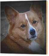 Daisie Our Corgi Wood Print