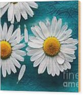 Daisies Floating In Water Wood Print