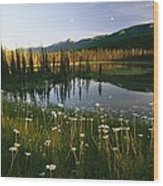 Daisies Grow Near A Lake In Yoho Wood Print