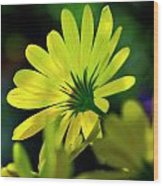 Daisy A Different Look Wood Print