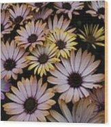 Daisy Beauty Wood Print