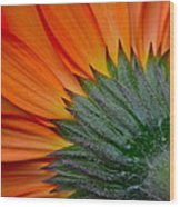 Daisy Delight Wood Print