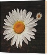 Daisy Dew Wood Print