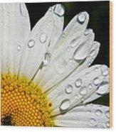 Daisy Drops Wood Print