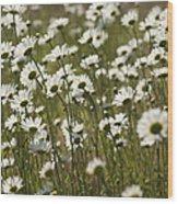 Daisy Fields Forever - Alabama Wildflowers Wood Print