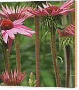 Daisy Forest Wood Print