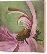 Daisy Fun - A01v04b2t05 Wood Print
