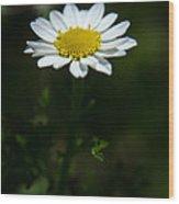 Daisy In Full Growth Wood Print