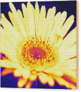 Daisy In Neon Wood Print