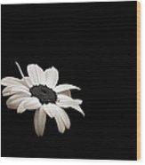 Daisy In The Dark Wood Print