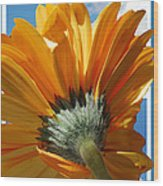 Daisy In The Sky Wood Print by Rozalia Toth
