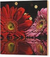 Daisy Mates Wood Print