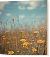 Daisy Meadow Wood Print