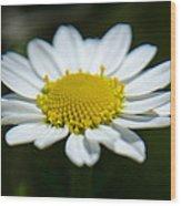 Daisy On Green Wood Print