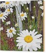 Daisy Visitor Wood Print