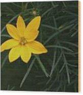 Daisy Wannabee Wood Print