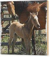 Dam And Foal Wood Print